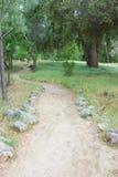 土道路穿过绿色森林 免版税库存图片