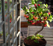 从黏土,手工制造盆景的樱桃树 库存照片