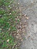 土质地面3 免版税库存照片