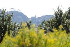 圣伯纳迪诺、五乡地、betweet树和黄色花教会  其中一个利古里亚的山的修道院 免版税库存照片