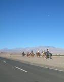 圣佩德罗火山,智利 免版税库存图片