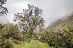 圣克鲁斯艰苦跋涉,山脉布朗卡,秘鲁南美风景  库存照片