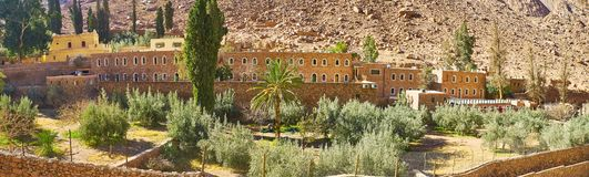 圣凯瑟琳修道院,西奈,埃及橄榄色的果树园  库存照片