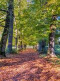 圣十字架高尚的贫穷医院和Almhouses,在秋天温暖的平衡的阳光下,温却斯德,汉普郡,英国 免版税库存图片