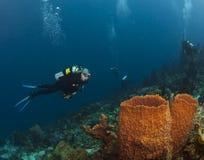 圣卢西亚潜水者和海绵 库存图片