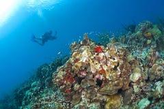 圣卢西亚礁石的摄影师 免版税库存图片