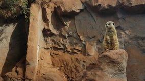 圣地亚哥动物园动物 库存图片