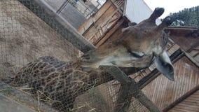 圣地亚哥动物园 免版税库存照片