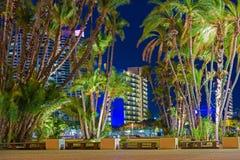圣地亚哥市棕榈树 图库摄影