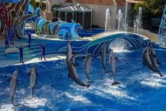 圣地亚哥,美国- 2015年11月, 15 -在海世界的海豚展示 免版税库存照片