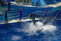 圣地亚哥,美国- 2015年11月, 15 -在海世界的海豚展示 免版税图库摄影