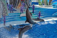 圣地亚哥,美国- 2015年11月, 15 -在海世界的海豚展示 库存照片