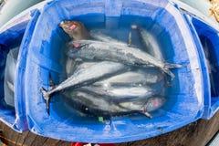 圣地亚哥,美国- 2015年11月17日-卸载金枪鱼的渔船在日出 库存图片