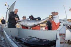 圣地亚哥,美国- 2015年11月17日-卸载金枪鱼的渔船在日出 免版税库存图片