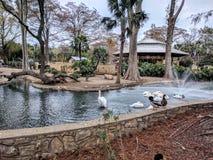 圣安东尼奥动物园 免版税图库摄影