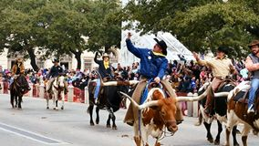 圣安东尼奥,得克萨斯美国- 2018年2月3日:乘坐得克萨斯通过白杨的男人和妇女长角牛牛 股票录像