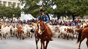圣安东尼奥,得克萨斯美国- 2018年2月3日:在游行期间,马的牛仔成群得克萨斯通过历史的白杨的长角牛牛 股票视频
