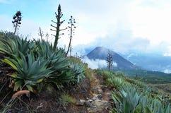 圣安娜和Yzalco火山 免版税库存照片