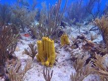 圣安德列斯海岛 库存照片