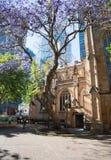 圣安德鲁` s大教堂和兰花楹属植物树 免版税库存图片