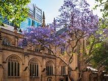 圣安德鲁` s大教堂在悉尼在春天 免版税库存图片