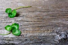 圣帕特里克天与假日标志三叶草的贺卡 库存照片