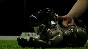 圣彼德堡,俄罗斯- 2018年11月12日:愉快的狗机器人在绿色草坪说谎 股票录像