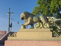 圣彼德堡,看家狗狮子的图 库存图片