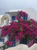 圣托里尼开花浪漫海岛希腊 免版税库存图片