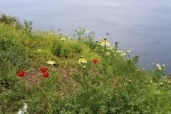 圣托里尼用花装饰的草甸  库存图片