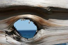 圣洁木头 库存图片