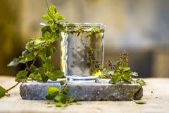 圣洁蓬蒿、tulsi或者罗勒属tenuiflorum水在一块透明玻璃 图库摄影