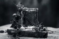 圣洁蓬蒿、tulsi或者罗勒属tenuiflorum水在一块透明玻璃 免版税库存图片