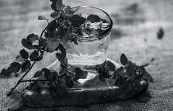 圣洁蓬蒿、tulsi或者罗勒属tenuiflorum水在一块透明玻璃 免版税图库摄影