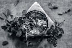 圣洁蓬蒿、tulsi或者罗勒属tenuiflorum水在一块透明玻璃 免版税库存照片