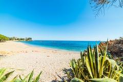 圣玛丽亚Navarrese海岸线春天 免版税图库摄影