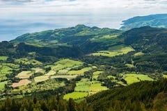 圣米格尔的亚速尔群岛绿色草木茂盛的牧场 库存图片