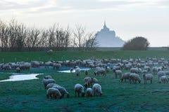 圣米歇尔山和绵羊群 免版税库存照片