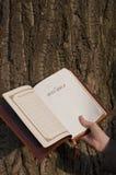 圣经被开张的现有量藏品 免版税库存照片