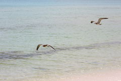 圣罗莎海滩 库存照片