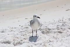 圣罗莎海滩 库存图片