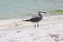 圣罗莎海滩 免版税库存照片