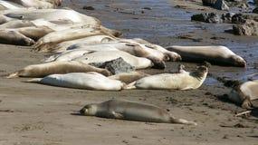 圣西梅昂,美国- 2014年10月7日, :海象在没有的高速公路的景色点 1或太平洋海岸Hwy 库存图片