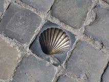 圣詹姆斯的香客的古铜色壳标志鹅卵石的 库存图片