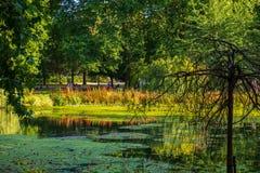 圣詹姆斯` s公园看法在有开心的人的伦敦在一个美好的夏天下午的背景中 图库摄影