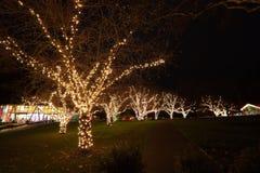 圣诞前夕在Butchart庭院里 库存照片