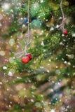 圣诞卡用在一个云杉的分支的草莓 雪 库存照片