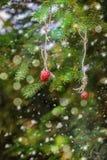 圣诞卡用在一个云杉的分支的草莓 库存图片