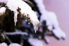圣诞卡的背景-与雪的冷杉分支在winte 库存图片