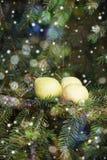 圣诞卡:在一个云杉的分支的梨 免版税图库摄影